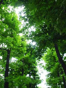 Photo: 珈琲屋から見たビルの谷間の緑 2003. Tokyo, Japan, Sony Cyber-shot U10, 5mm(33mm)/F2.8, JPEG.