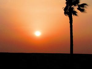 Photo: カリフォルニア、、なわけねーだろ 2004. Maihama, Contax Tvs Digital, Carl Zeiss Vario Sonnar T* F2.8-4.8/35mm-105.