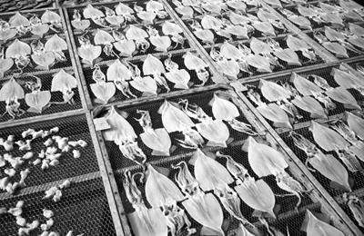 Photo: 絶賛天日干中 2006. Kanagawa, Japan, CONTAX T3 Carl Zeiss Sonnar T* 2.8/35, Kodak 400TX.