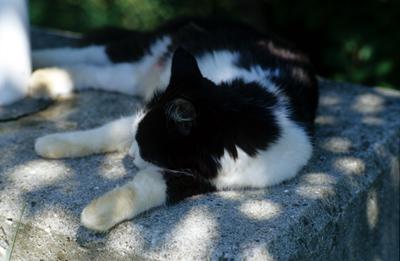 Photo: 香川の猫 2006. Kagawa, Japan, Contax RX, Carl Zeiss Planar T* 1.4/85(MM),  Kodak EBX