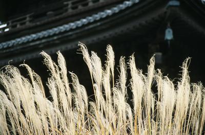 Photo: 2000. Kyoto, Japan, Nikon F100, 35-105mm F3.5-4.5D, Fuji-Film