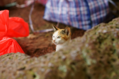 Photo: kitty 2010. Malacca, Malaysia, Sony α900, Carl Zeiss Planar T* 85mm/F1.4(ZA)