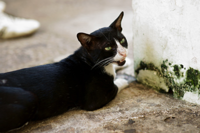 a cat in Malacca