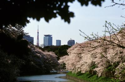 Photo: 春景4 2008. Tokyo, Japan, Contax RX, Carl Zeiss Vario-Sonnar T* 35-135mm/F3.3-4.5(MM), Kodak EBX