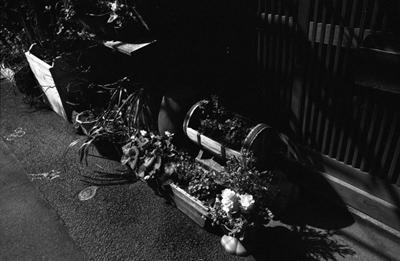 Photo: 路地花壇 2008. Tokyo, Japan, Zeiss Ikon, Carl Zeiss Biogon T* 2.8/28(ZM), Kodak 400TX.