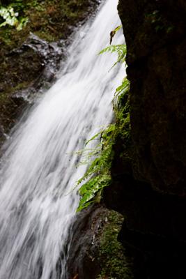 Photo: waterfall 2009. Tokyo, Japan, Sony α900, Carl Zeiss Planar T* 85mm/F1.4(ZA), cRAW