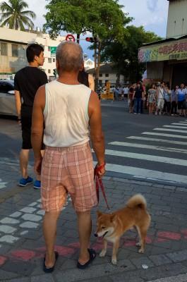 Pochi dog in Tainan.