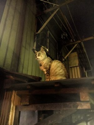 The cat in a façade.