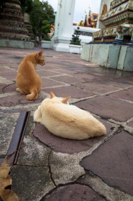 """Photo: """"Cat, cat, cat."""""""