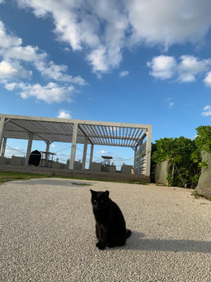 "Photo: ""Mayaa (Okinawa cat)."""